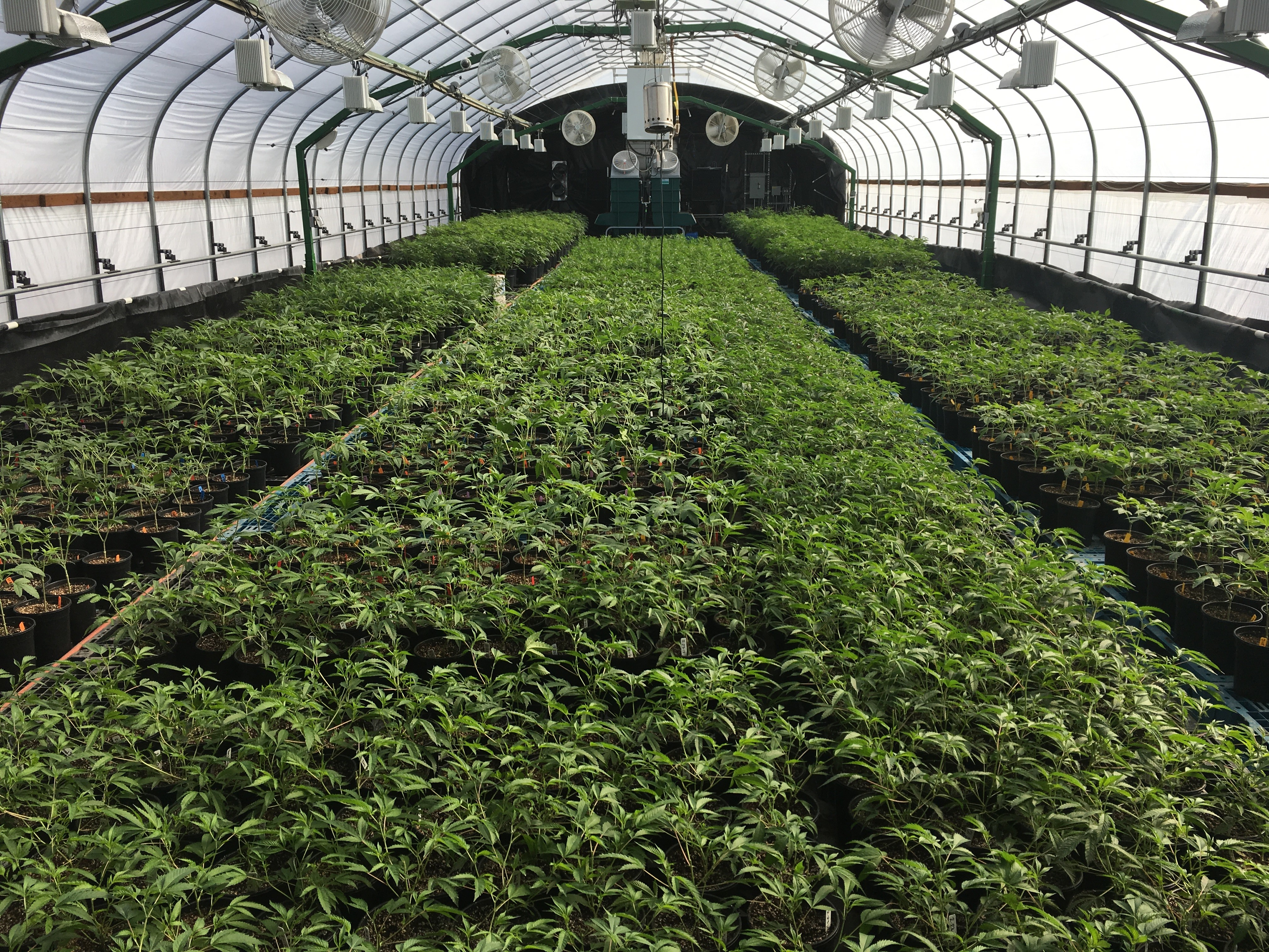 Heroes of the Farm Greenhouse Nursery legal cannabis